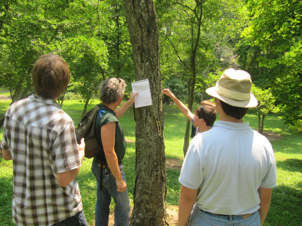 4-H Members practicing forestry judging